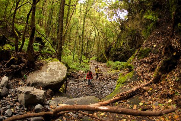 La Palma: Reconecta con la naturaleza
